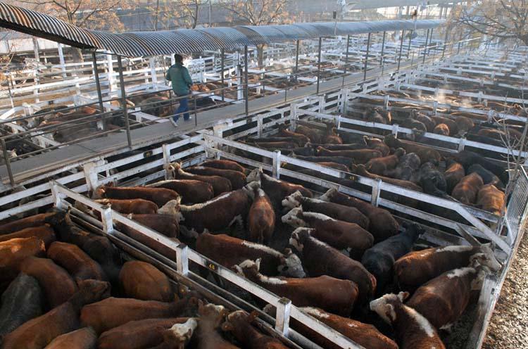 Liniers se despide del Mercado de Haciendas