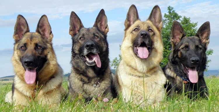 Perros entrenados, un programa diferente