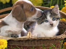 cane-e-gatto,-cesto-172570-min
