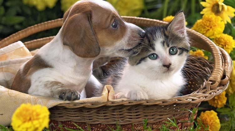 Los porteños prefieren los gatos antes que los perros