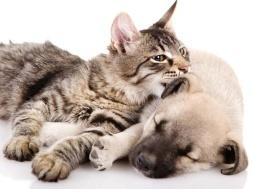 stop-maltrato-perros-gatos-min