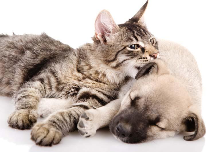 Compartiendo con perros y gatos