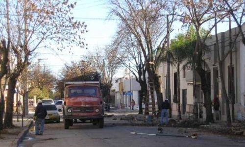 Censo para árboles del barrio de Boedo