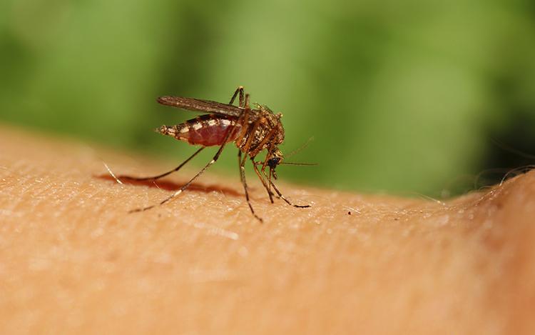 Comienza el Plan Preventivo para combatir el dengue en la Ciudad