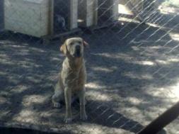 762914610-2-la-casona-de-los-perros-cuidado-de-mascotas
