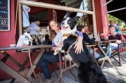 mascotas bares