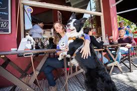 Las mascotas son las nuevas mimadas en los bares de Boedo