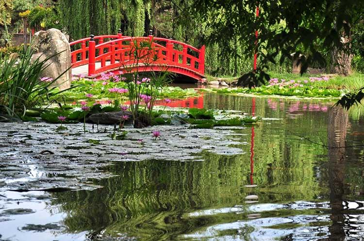 El Jardín Japonés cumple 50 años !!!!