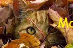 gato-otono