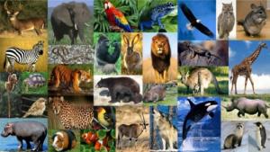 animales_exoticos