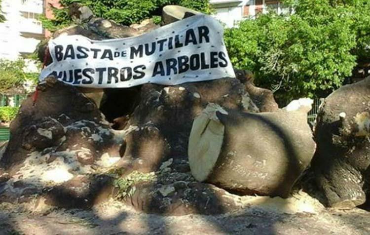 Descontento por el ombú tallado de parque Rivadavia