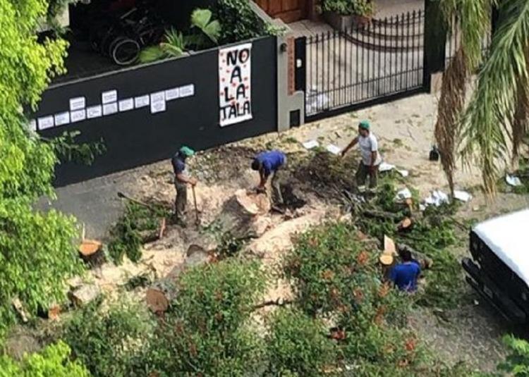 Villa Devoto: El Gobierno Porteño taló un nogal añejo, pese a la resistencia de los vecinos