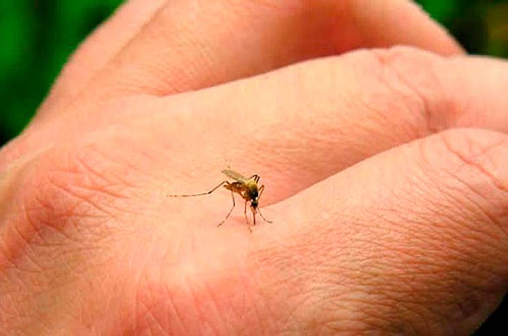 Dengue en la Ciudad: Especialista advierte una situación preocupante