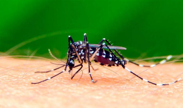 En CABA los casos de dengue ascienden a 5.221