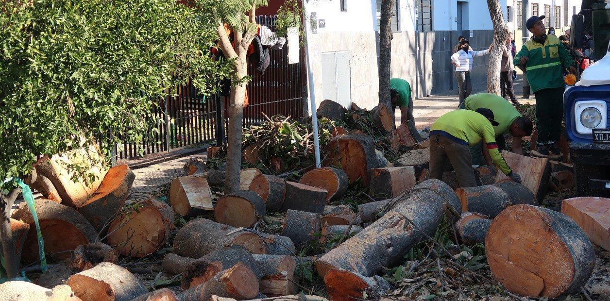 En CABA la justicia volvió a frenar la poda de árboles y los vecinos denuncian mutilaciones